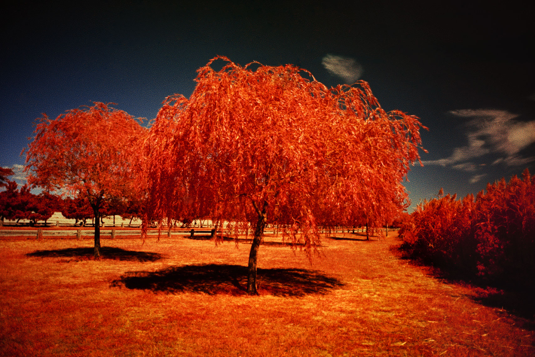 12_Infrared_Trees