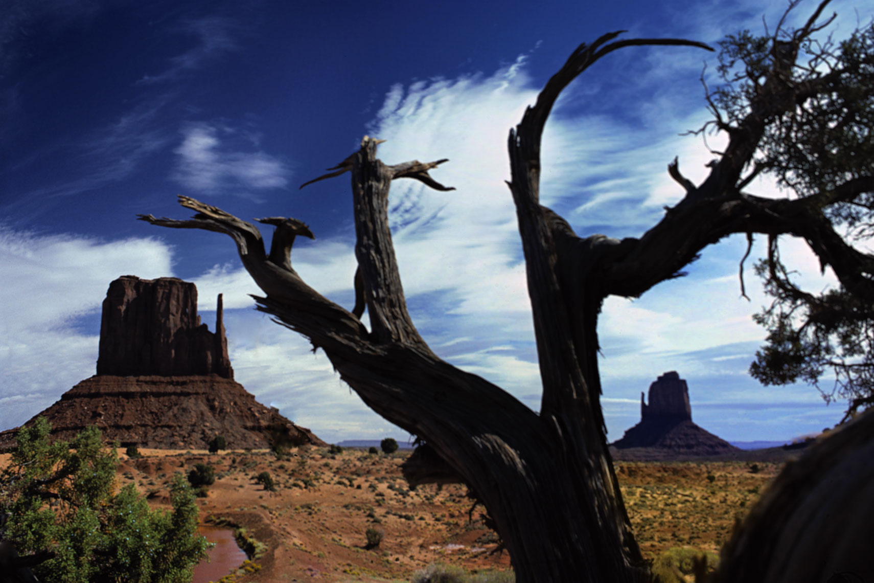 12_Monument_Valley_Tree